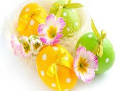 tapeta wielkanocne pisanki z kokardkami udekorowane kwiatami prymulki tapeta wielkanocne pisanki z kokardkami udekorowane kwiatami prymulki